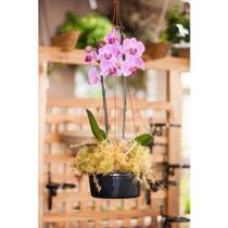 Vaso de Orquídea n 02 Preto Kit c/ 06 unidades - Colibri Plásticos