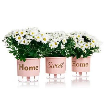 3 Vasos Auto Irrigáveis Home Sweet Home N03 Rosa Quartzo Médio 16x14 - Raíz vasos autoirrigáveis