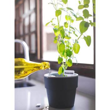 Vaso Auto Irrigável M Horta Vasos Para Plantas Tempero Flores Chumbo - Ou