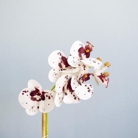 Imagem de Arranjo de Orquídea Artificial Tigre no Vaso Fendi  Formosinha