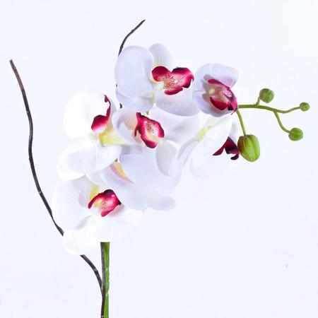 Imagem de Arranjo de Orquídea Branca Toque Real Classic