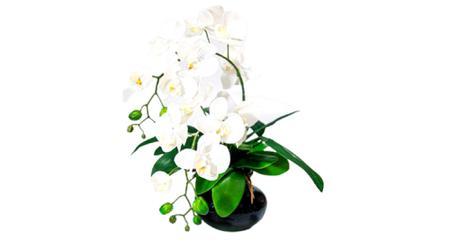 Imagem de Arranjo de orquídeas branca de silicone