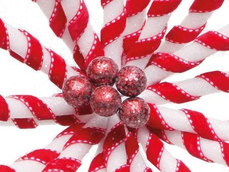 Imagem de Flor Natalina Poinsétia Vermelha E Branca