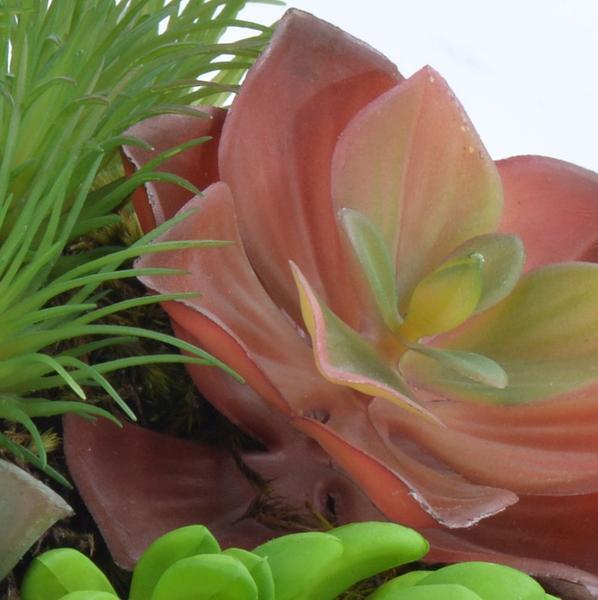 Imagem de Arranjo Jardim de Suculentas Coloridas