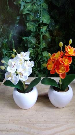 Imagem de 8 arranjos de mini orquídeas