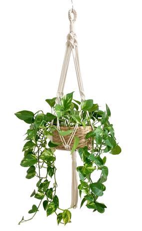 Imagem de Macramê Suporte para Plantas Cor Cru