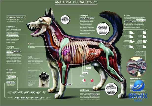 Imagem de Mapa Anatomia Cachorro Cão Pet Veterinario 110 X 80 Cm