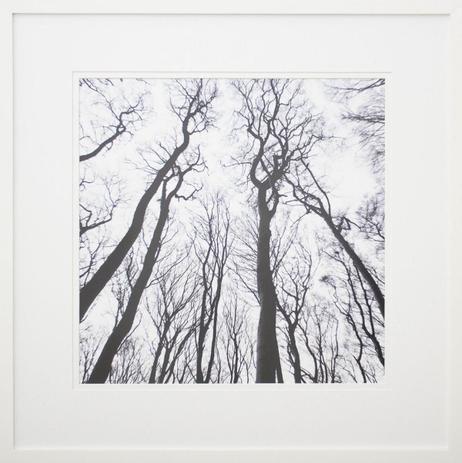 c0bb672de Quadro Decorativo com Moldura Branca Paisagem Árvores em Preto e Branco  70x70cm - Decore pronto