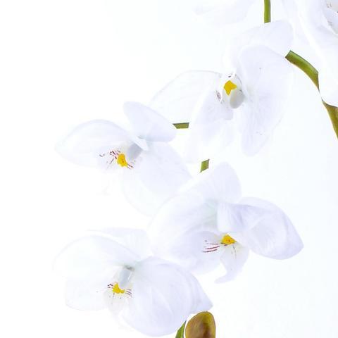 Imagem de Arranjo de Orquidea Artificial Branca Gala