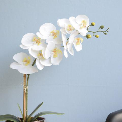 Imagem de Arranjo de Orquídea Branca de Silicone no Vaso Vidro Transparente  Linha Permanente Formosinha