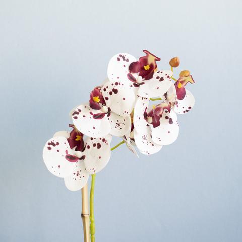 Imagem de Arranjo de Orquídea de Silicone Tigre no Vaso de Vidro Nude Fosco Formosinha
