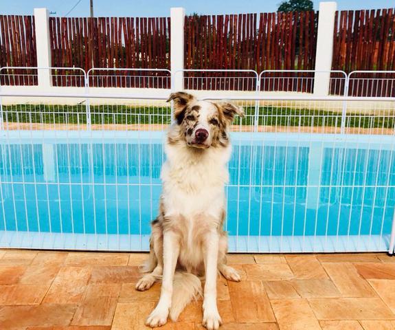 Imagem de Cercado Para Piscina Proteção Cães Pet Cão Cachorro 5x90cm