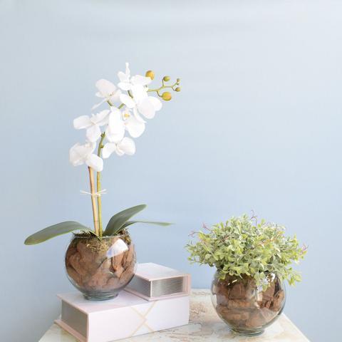 Imagem de Kit com 2 Arranjos Flor Artificial Orquídea Branca e Peperômia no Vaso de Vidro