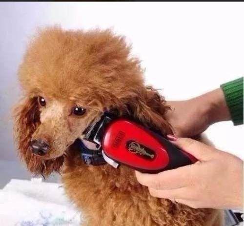 Imagem de Kit Máquina de Tosa Pet com Acessórios 12W Qirui QR-PET2505