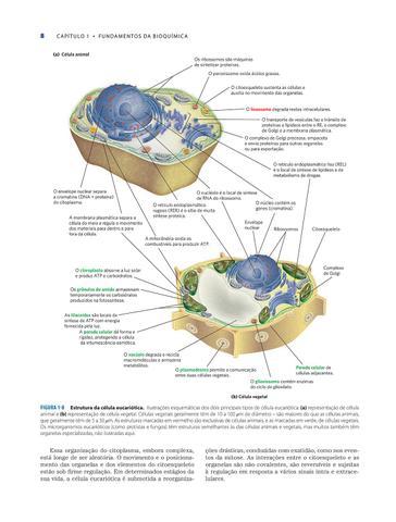 Imagem de Livro - Princípios de Bioquímica de Lehninger