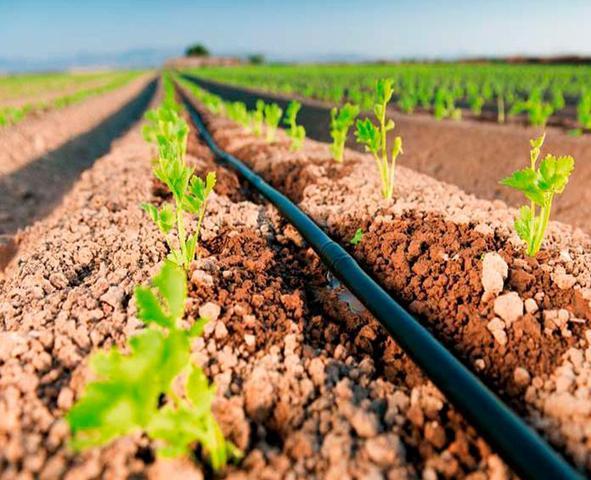 Imagem de Mangueira fita de gotejo irrigação jardim 30cm - 1000 metros