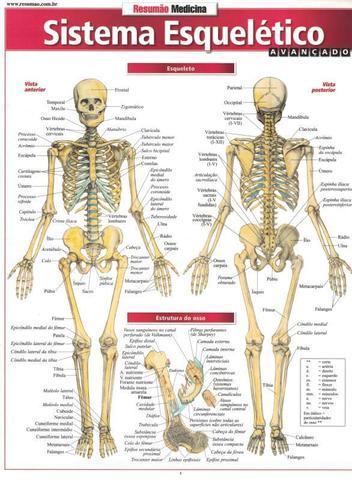 Imagem de Sistema esqueletico avancado